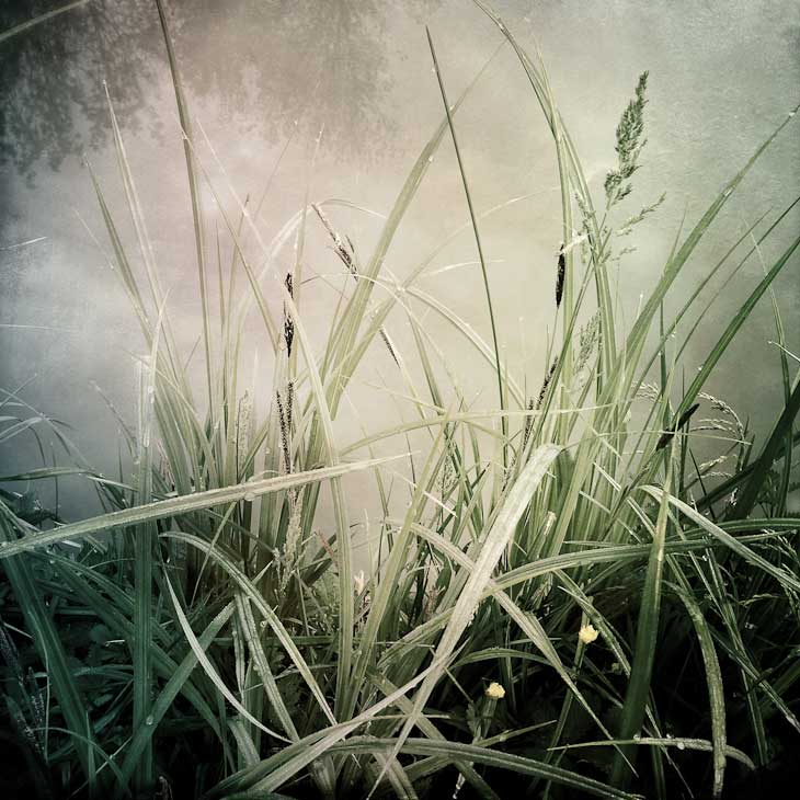Grasses-,-after-Durer-web